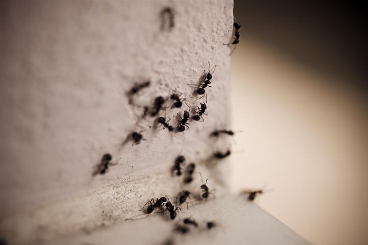 receita caseira para eliminar formiga
