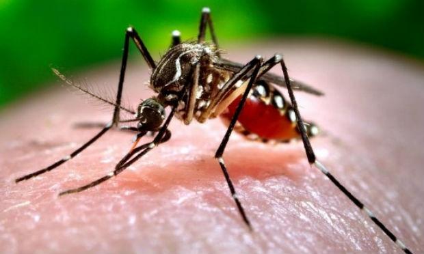 dengue chikungunya zika-virus
