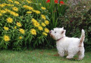 Cachorro brincando no jardim