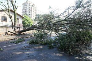 Queda de árvores causado pelas chuvas de verão